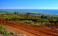Sugar cane field, red dirt, looking toward coast from Waimea Canyon Drive