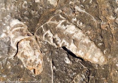 Marine life fossils