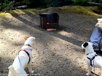 Rolly discovering the campfire