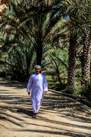 Omani man walking under the oasis date palms