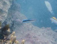 Blue Lagoon reef