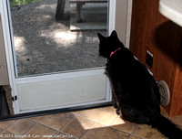 Sheba looking out the screen door of the motor home