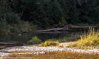 Stoltz Pool and gravel bar on the Cowichan River