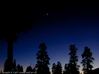 Crescent Moon through the Pine trees after sunset