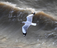 A tern following the ship
