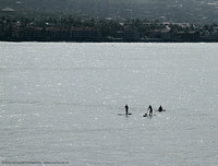 Three paddle surfers & a dog