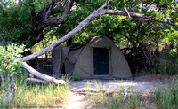 My tent under the shade of the trees