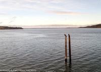 Cormorants on pilings