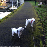 Tanner & Rolly on the walkway