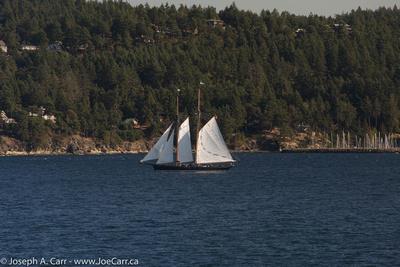 A two-masted schooner sailing along the Pender Island coastline