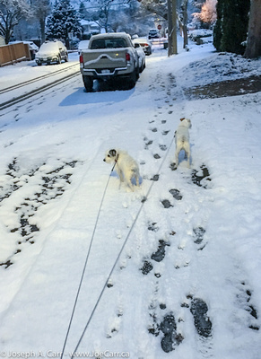 JoeTourist: My Neighbourhood in Victoria &emdash; Rolly and Tanner in the snow on Jackson Street