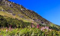 Terraced mountainsides and lupin