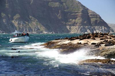 JoeTourist: Cape Peninsula &emdash; Cape Fur Seals on Duiker Island
