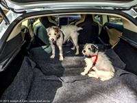 Rolly & Tanner in the back of my Tesla Model S