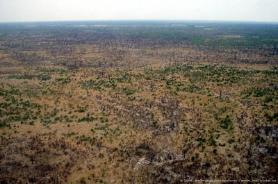 JoeTourist: Linyanti Camp &emdash; Aerial view of the Okavango Delta - dry area near Linyanti Camp
