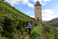 Alice leads the group from the tower through the vineyards