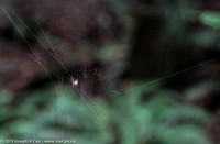 Spider on its web under the forest canopy