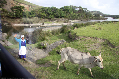 JoeTourist: Eastern Cape Province &emdash; A woman and her cow alongside the highway